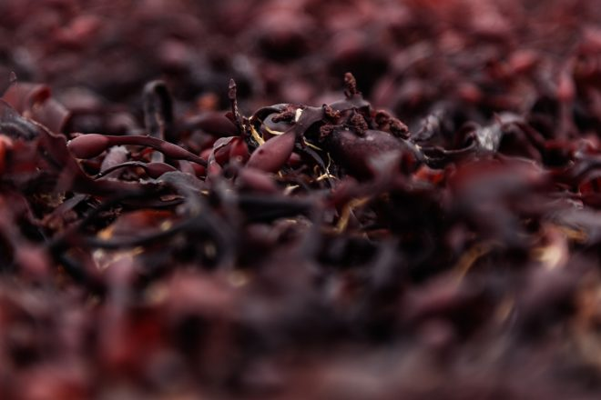 New health benefits of red seaweeds unveiled