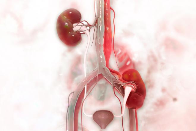 Hansa Biopharma announces long term follow-up data demonstrating 3-year graft survival of 84% after imlifidase treatment and transplantation