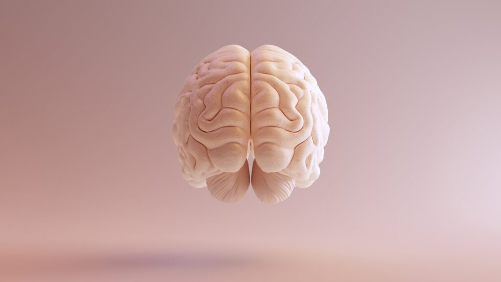 Beige fat 'indispensable' in protecting the brain from dementia
